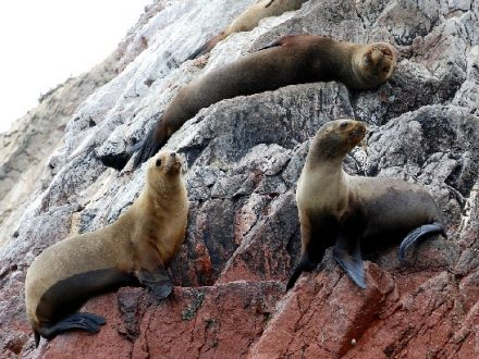 Paracas Ballestas Islands Tour with Green Peru Adventures